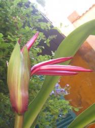 fleur dans mon patio