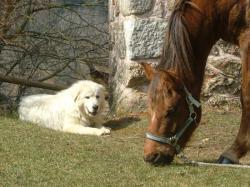 Achille et Tango