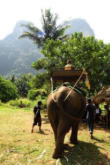 Symbolique de l'éléphant  dans ELEPHANT Elephant-libre-de-droits---morguefile