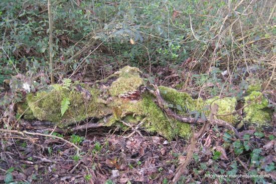 """Le tronc d'arbre """"crocodile"""""""