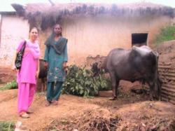Bufflonne de Shamim