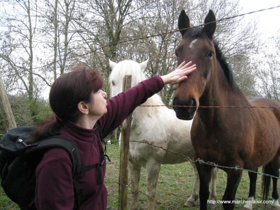 Paula et les chevaux