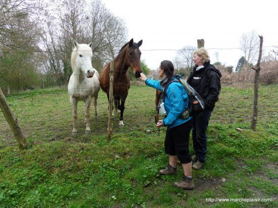Annick et les chevaux
