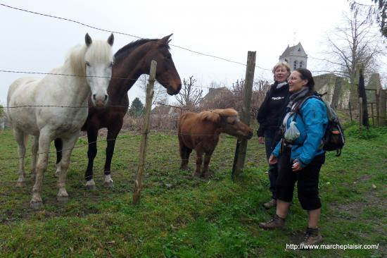Annick, Catherine et les chevaux