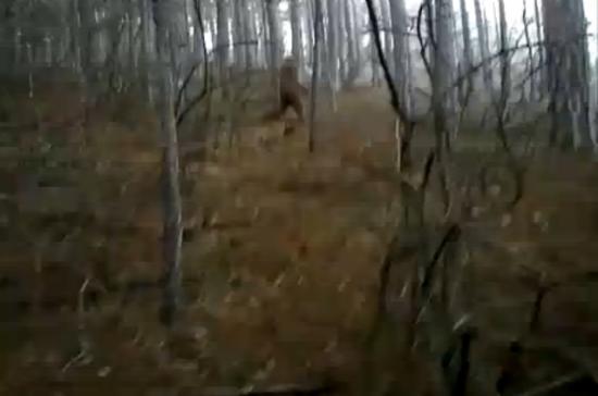 bigfoot ukraine serega yalta hominidé cryptozoologie cryptozoology wild man homme sauvage vidéo SDnikitin patterson gimlin patty cryptide printemps unknow hominid