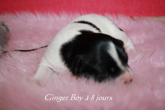 Ginger Boy