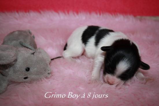 Grimo Boy