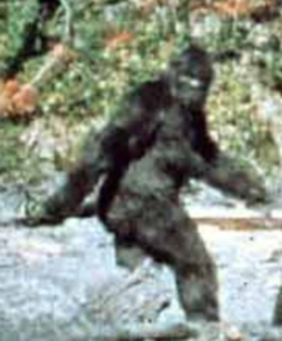 Cryptozoologie cryptozoology United states USA bigfoot sasquatch 20 octobre 1967 hominidé cryptide Roger Patterson Bob Gimlin René Dahingen Bluff Creek Californie du Nord vidéo film super 8
