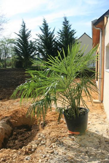 Jardin et portail bois m tal for La maison du palmier