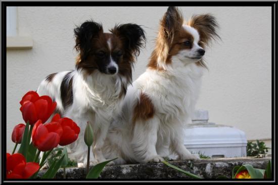 lady et mimi