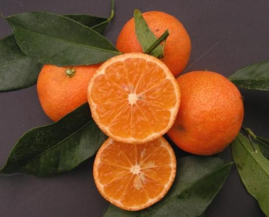 clementinier fruit