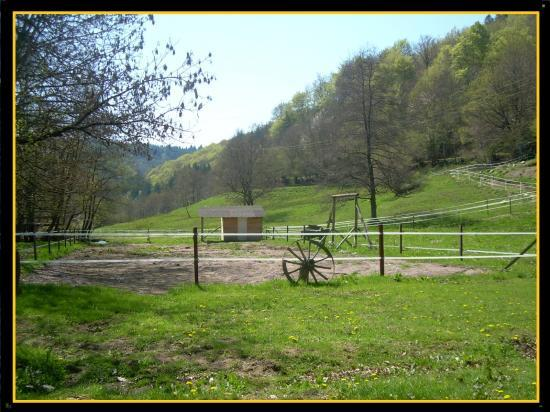 CARRIERE PONEY /  CHEVAUX