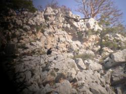 Vautour moine (Aegypius monachus) et fauve (Gyps fulvus)
