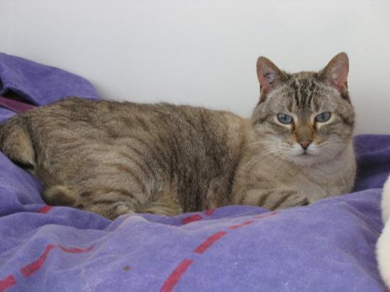 Ulysse, mâle de 13 ans adopté.