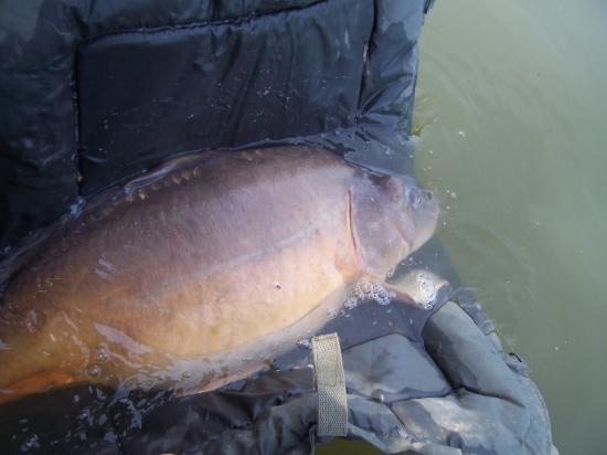 carpe,carpio60,colmic super carpa xt