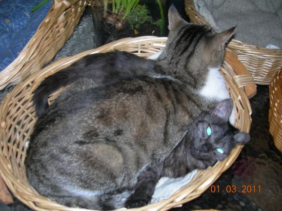 Titite et Grizou