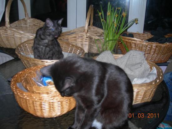 Lulu et Titite