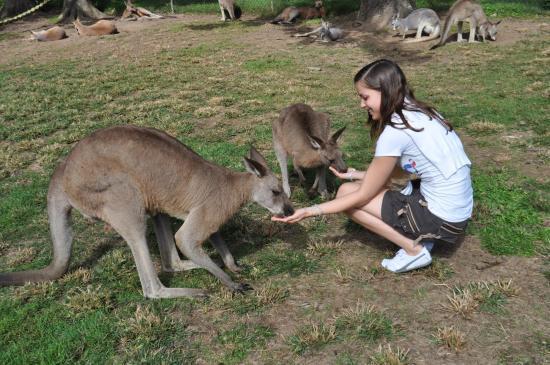 sophie & les kangourous