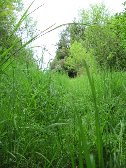 Les plantes sauvages - Quelles sont les plantes que l on peut bouturer ...