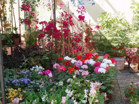 fleurs et plantes de la belle blida. Black Bedroom Furniture Sets. Home Design Ideas
