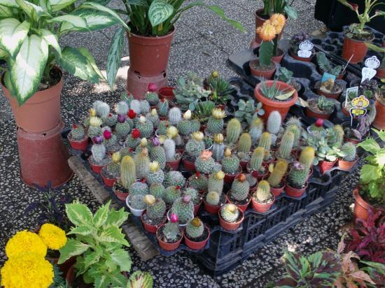 Petit cactus pas cher for Achat plante interieur