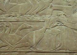 Bas relief d'un tombeau de Sakkara (Egypte) environ 4500 ans