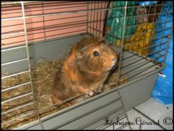 Fiona dans sa cage