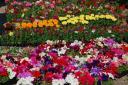 Marché aux fleurs à VCondé en Brie : le Marché aux fleurs     Condé en Brie
