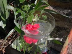 la fleur, attachée, reste vivante pendant l'extraction