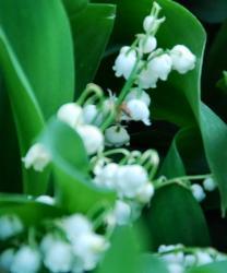 Marché aux fleurs à VCondé en Brie : le Marché aux fleursCondé en Brie