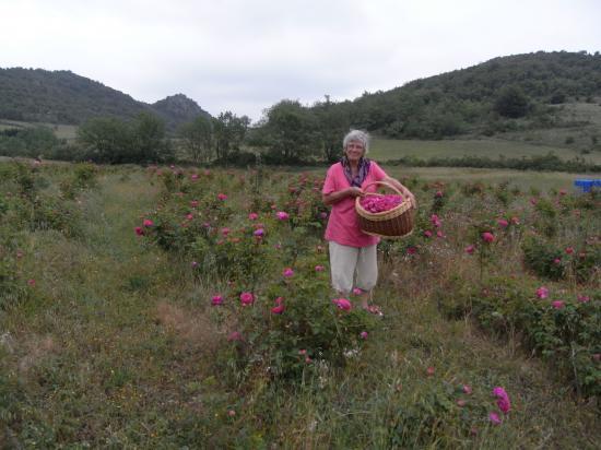 """Marie-Laurence Million dans sa roseraie (""""Roses et Délices"""")"""