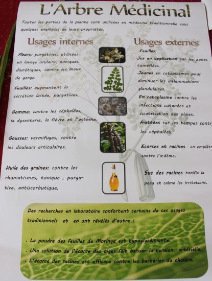 le moringa et ses vertus pdf