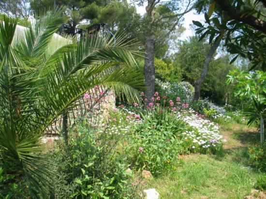 Le palmier se dresse majestueusement sur un tapis de valérianes et  d'osteospernums