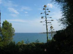 Les agaves mettent 15 à 20 ans à fleurir et meurent au début de l'hiver