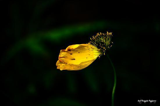 fin d'une fleur