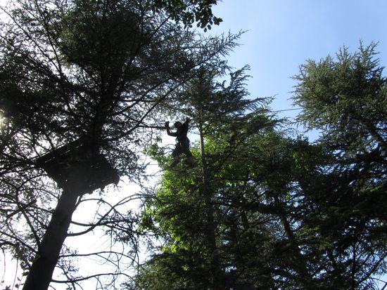 Petit Canaillou fait le zinzin dans les arbres
