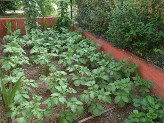 jardin 3 pommiers avec rosiers cassissier pommes de. Black Bedroom Furniture Sets. Home Design Ideas