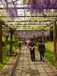 j'suis le poinconneur des lilas... - Nagoya