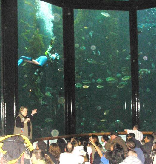 En direct de l'aquarium