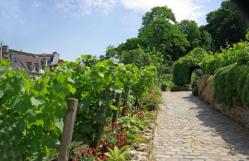 the wineyard of Montmartre