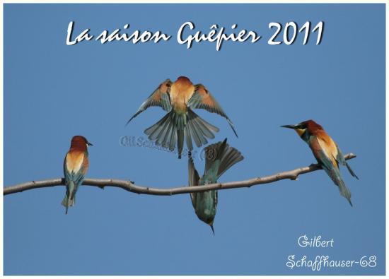 Guêpier 2011