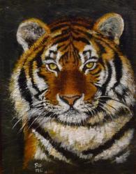 tigre siberie