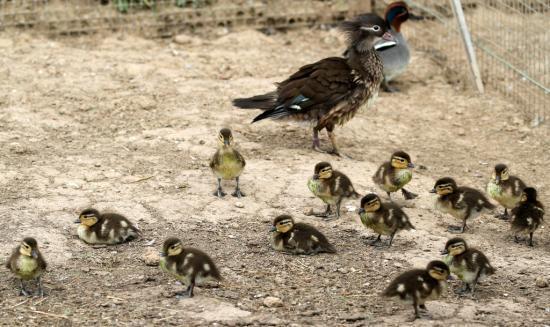 famille nombreuse : 13 petits