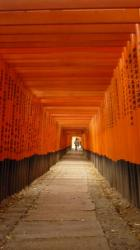 Takusan torii - Kyoto