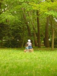 Le parc central de Kyoto est propre a la meditation