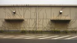 Un tremblement de terre ca laisse des traces... et des fissures! - Kobe
