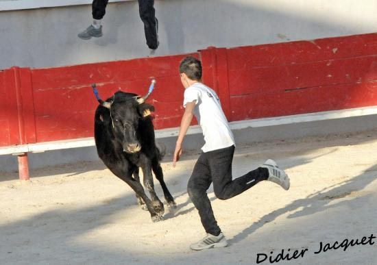 Vache N° 825 sur Florentin Garcia