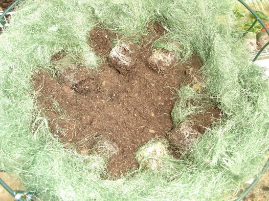 Remplissez ensuite de terreau le reste de votre corbeille et plantez ...
