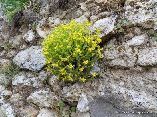 fleurs dans un mur de pierres
