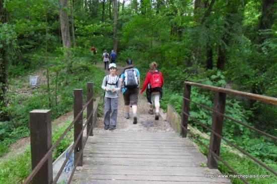 Pont de bois en forêt
